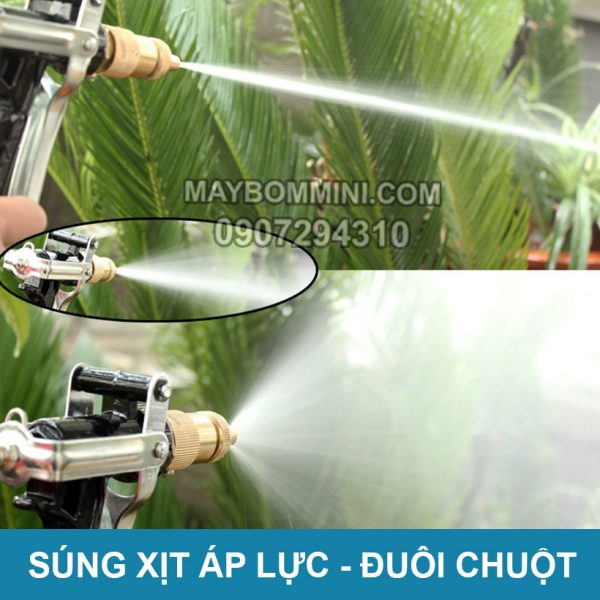 Sung Xit Chinh Tia